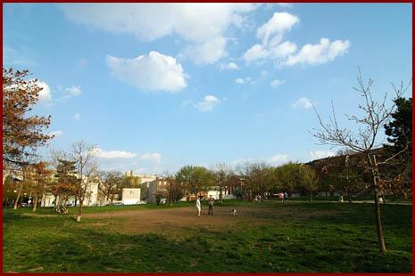 markward park